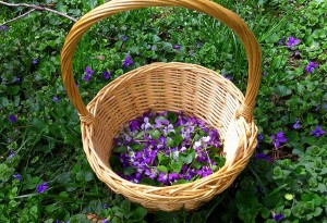 Violets in a Basket on Ground